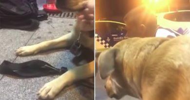 La muerte de la perra 'Sota' quita el sueño a Ada Colau La agria disputa entre los animalistas y la Guardia Urbana por el disparo al animal en plena calle atrapa a la alcaldesa